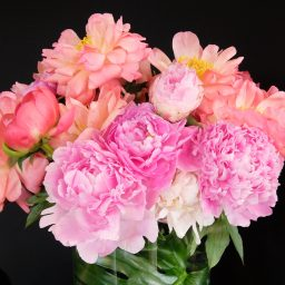 Giovanni Gastel - FLOWERS